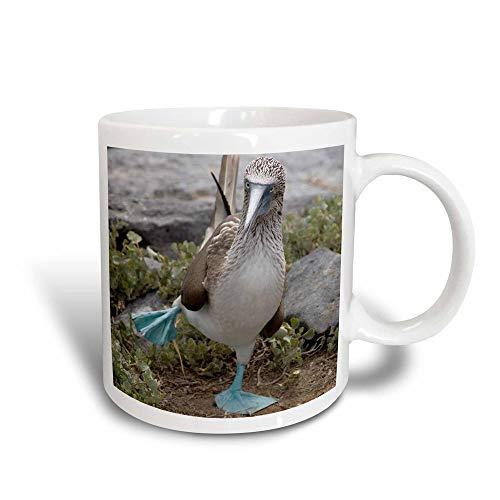 N\A Ecuador Galápagos Islands Blue-Footed Booby-SA07 CMI0902-Cindy Miller Hopkins Magic Transforming Mug, Negro/Blanco