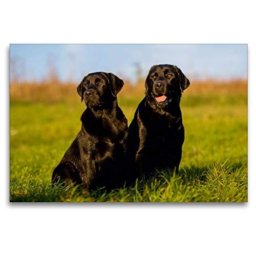 Labrador Retriever – un corazón sobre 4 patas., 120 x 80 cm