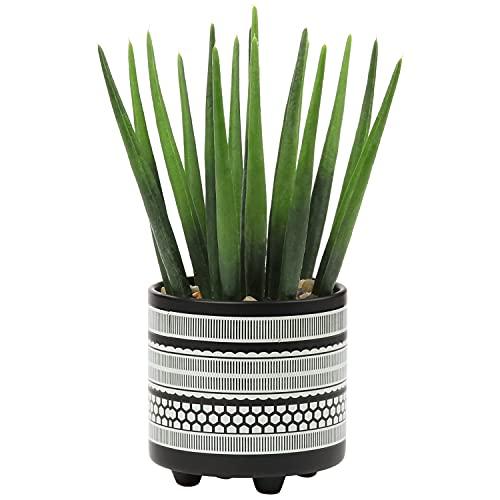 Briful Kunstpflanze Kaktus Künstlich...