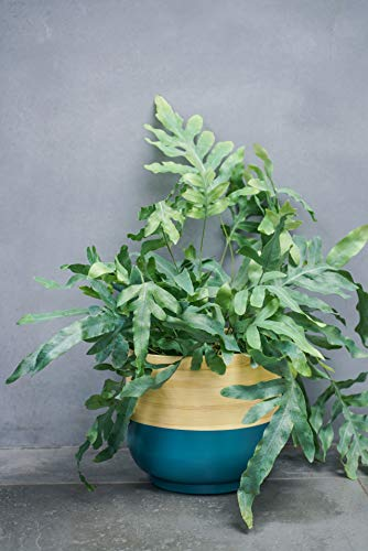 Ivyline BTP23 Pot, Bambou, Bleu Sarcelle, 23 cm