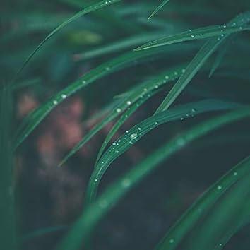 Melodías Ambientales Relajantes