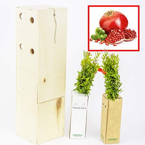 GRANADO ENANO. Arbolito de pequeño tamaño en caja de madera. Alveolo forestal del granado enano...
