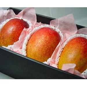 宮崎県産完熟マンゴー 大玉 3個 ( 1個:400g前後 ) 化粧箱入り 宮崎マンゴーの最高峰
