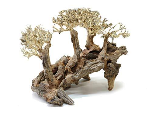 Aqualexs Aquarium Bonsai Driftwood (Model #2)