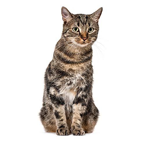 younikat Katzen Fensterbild I lebensecht groß I beidseitig Bedruckt I Fenster-Aufkleber I statisch haftend I Vogel-Schutz I selbstklebend wiederablösbar I dv_949