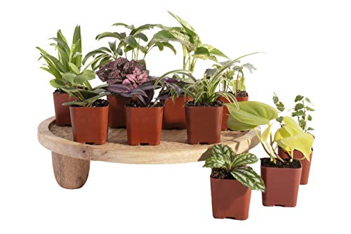 Leaf & Linen Classic Collection 12 HP-2 2 Inch House Plants, Set of 12, Multi