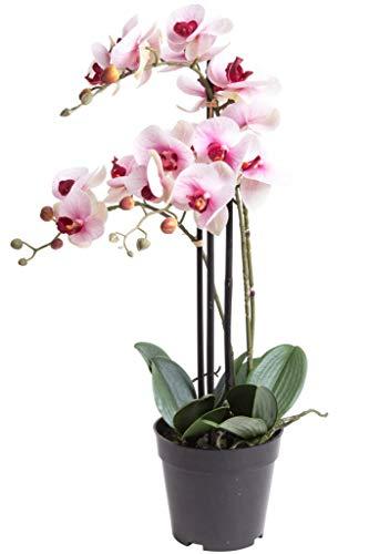 Nova-Nature künstliche Orchidee Bora (Orchideen Pflanze/Phalaenopsis) im schwarzen Kunststofftopf mit Rispen, Blättern und Luftwurzeln real Touch (Creme-pink, ca. 60 cm / 3 Rispen)