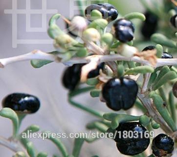 2016 Organic 200 / pack Goji Berry Seeds Goji berry de goji, graines de fruits viables Livraison gratuite