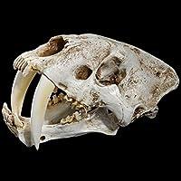 樹脂剣歯虎スカル彫刻、インテリアホームとコレクティブル7.1インチのための理想的な動物スケルトン飾り、(H)