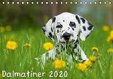 Dalmatiner 2020 (Tischkalender 2020 DIN A5 quer)