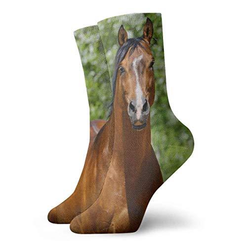Socks Calcetines Hübsche Pferd Calcetines cortos unisex para adultos que absorben la humedad atléticos para correr, fitness, viajes, trabajo