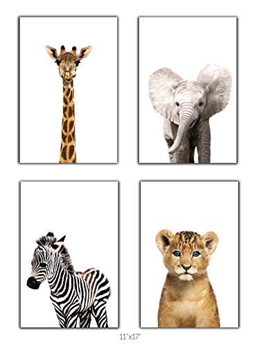 Designs by Maria Inc. Safari Baby Animals Nursery Decor Art - Set of 4 UNFRAMED Wall Prints (Option 2 (11x17)