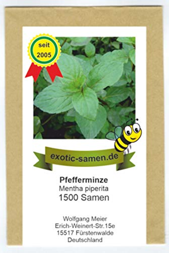 Pfefferminze - Mentha piperiata - 1500 Samen