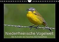 Niederrheinische Vogelwelt (Wandkalender 2022 DIN A4 quer): Grosse und kleine Voegel am Niederrhein (Monatskalender, 14 Seiten )