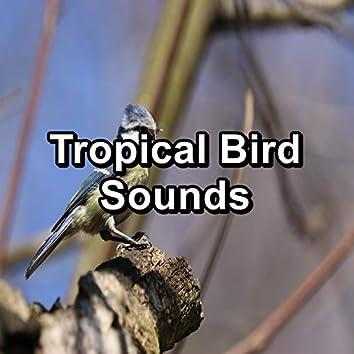Tropical Bird Sounds