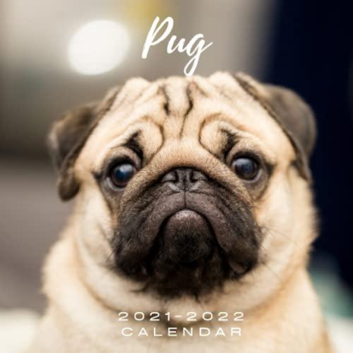 Pug 2021 - 2022 Calendar: September 2021 to December 2022 | Photo Mini Calendar 2021/2022 | 8.5' x 8.5' | Month to View | 16 Months Photo Calendar Schedule Organizer Planner | Pug gifts for pug lovers