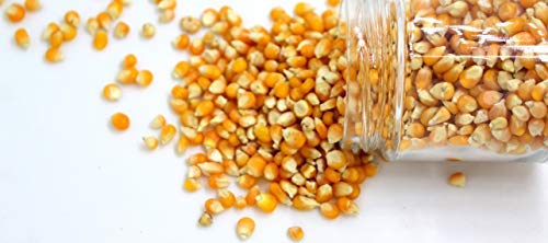 Handpicked Fresh Popcorn with homemade seasoning 500g. Natural & organic for healthy diet ready to pop makki seeds