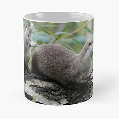Generic Animal Animals Otters Otter Best 11 oz Kaffeebecher - Nespresso Tassen Kaffee Motive !