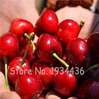 Amazon.com: fruta planta