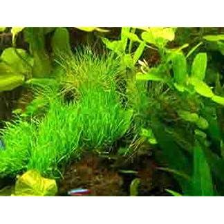 Mühlan Premium Aquariumpflanzen Set für 600-800
