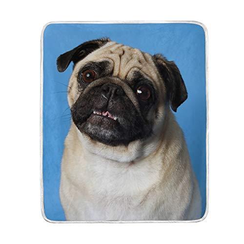 My Daily - Manta de microfibra ligera de poliéster con diseño de perro carlino, 127 x 152 cm