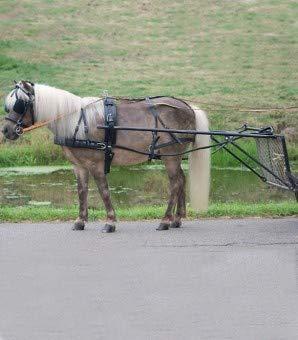 Einspänner Geschirr Economic, Pony und Shetty, schwarz, MS/Minishetty