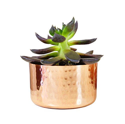 "Alchemade 3"" Hammered Copper Succulent Planter Plants"