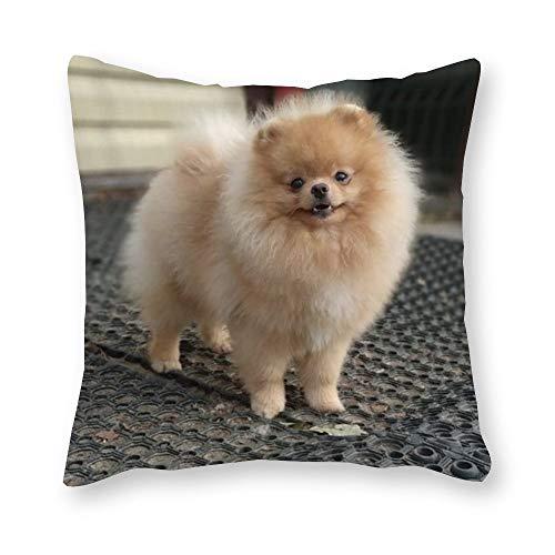 Cojín Pomeranian – Pop Art – Funda de almohada de lona individual – sin relleno – 40 x 40 cm (sólo la funda)