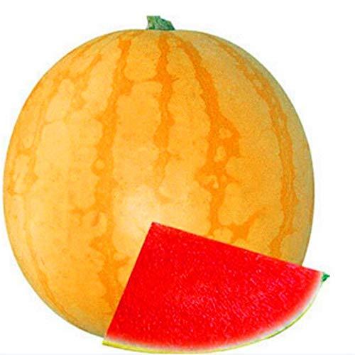 AGROBITS Japonais pastèque semences non transgéniques Super Sweet melon d'eau usine de légumes fruits très nutritifs Accueil jardinage 10 graines