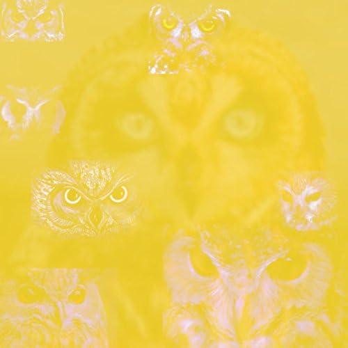 Ocho the Owl