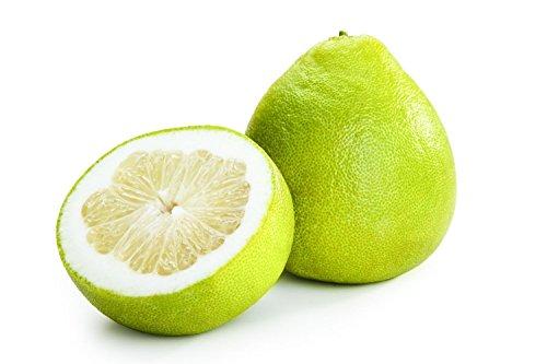 Miel Pomelo Citrus Maxima Grandis Pamplemousse Jabong Shaddock Seeds 10 PCS