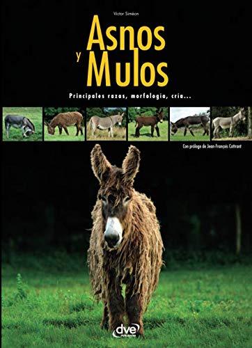 Asnos y mulas