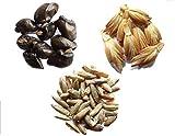 Vos Favoris 2014-3 sachets: 1 sachet de Grande Consoude 30 graines + 1 sachet de Grand Epeautre 3 grammes + 1 sachet de Seigle 3 grammes