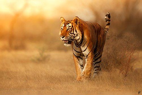 cuadro tigre de la marca TOIS ART