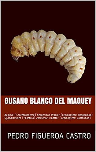 GUSANO BLANCO DEL MAGUEY: Aegiale (=Acentrocneme) hesperiaris Walker (Lepidoptera: Hesperidae) Synpalamides (=Castnia) escalantei Hopffer (Lepidóptera: Castniidae) (Spanish Edition)