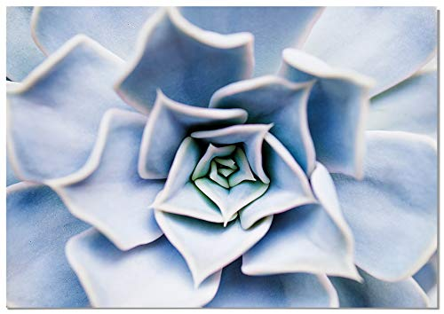 Panorama Póster Flor Suculenta 100x70cm - Impreso en Papel 250gr - Láminas Hojas Verdes - Láminas para Enmarcar - Cuadros Decoración Salón - Cuadros Botánica - Cuadros de Plantas