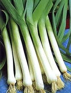 HOT!! - 500 Chinese Leek Oriental Garlic Flat Chive Allium Seed