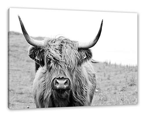 Highlandrind frontal in Schwarz-Weiss als Leinwandbild/Größe: 120x80 cm/Wandbild/Kunstdruck/fertig bespannt
