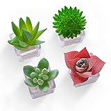HEY FOLY Cactus Succulent Refrigerator Magnet Cute 3D Mini Plant Fridge Magnets Decoration Kitchen,House,Office,Whiteboard (Bonsai)