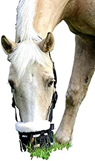 mini horse grazing muzzle