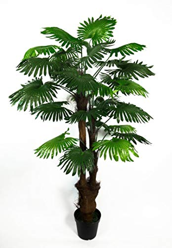 Seidenblumen Roß Fächerpalme 180cm ZJ künstliche Pflanzen Palmen Palme Kunstpalmen Kunstpflanzen Dekopalme