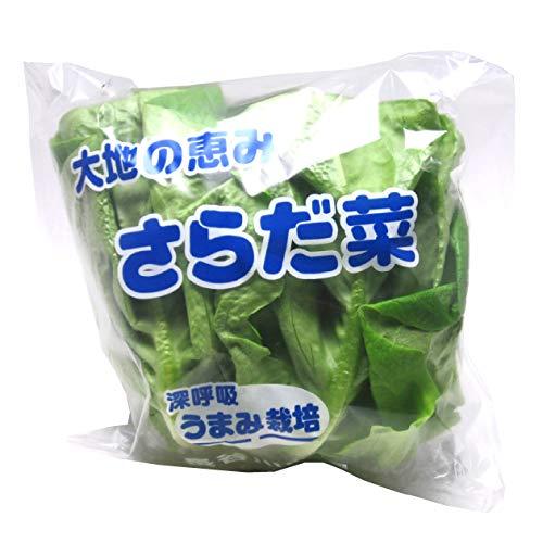 サラダ菜(低農薬)  5玉