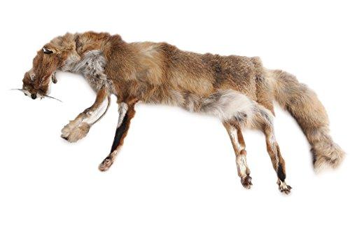 Firedog Fuchsdummy 3-teilig 3,0 kg