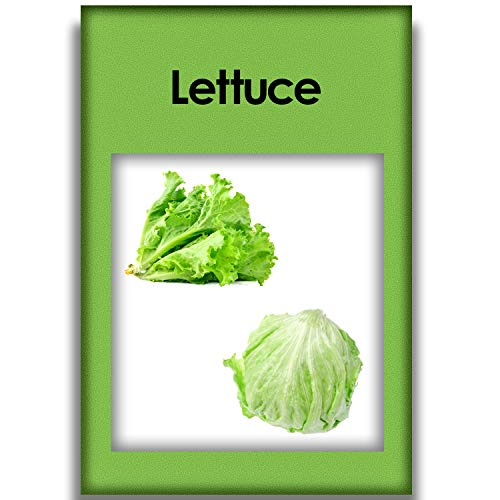 1000 Lettuce Mix Seeds Easy to Plant High Germination Rate for Growing Home Green Garden Plants Healthy and Refreshing is an Excellent Choice for Any Salad