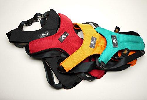Sleepypod ClickIt Sport Crash-Tested Car Safety Dog Harness (XLarge, Robin Egg Blue)