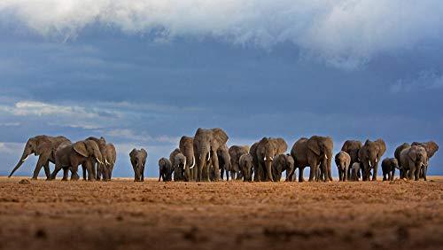 Puzzel 1000 Stukjes,Afrikaanse Olifanten Kudde,Puzzeltjes Voor Volwassenen En Kinderen Voor Familie, Educatief Speelgoed Voor Volwassenen Vrienden Verjaardagscadeau