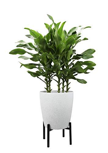 Worth Garden Pflanzenständer aus Metall für Hause Zimmer Balkon L 33 x B 33 x H 20,3CM Besten für 29cm Durchmesser Töpfe passen (Pflanzer Nicht enthalten) Blumentopfständer