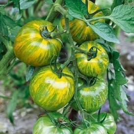 blush tomato seeds - 7