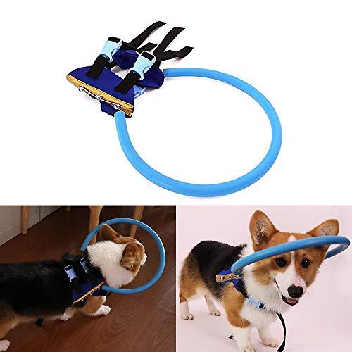 Bulz Arnés Ciego para Perros, protección contra colisiones, Dispositivo Seguro para Perros Ciegos