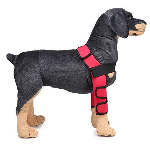 PETCUTE Hunde gelenkschutz Sprunggelenk Wrap Hunde Bandage Gelenkbandage für das Vorderbein ihres Hundes (1 Paar)